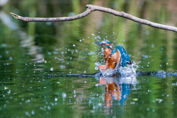 Kingfisher Eruption