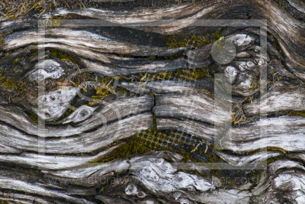 Log Abstract