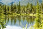 Boreal Forest Reflection