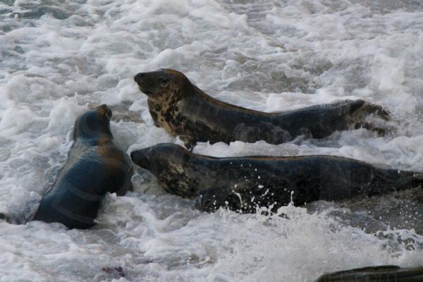 Grey Seals meeting